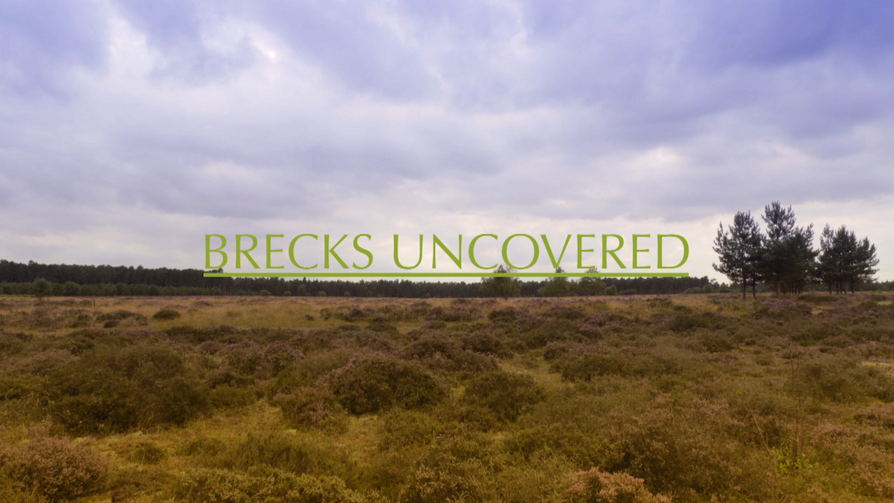 Brecks Uncovered